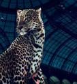 La collection Haute Joaillerie de Cartier pour la Biennale des Antiquaires