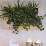 Les cadres végétaux Wallflower